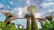 Gardens by the Bay: Khu rừng cơ học đặc biệt ở Singapore