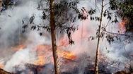 Liên tiếp cháy rừng ở Quảng Ngãi, thêm một người tử vong
