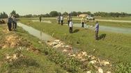 Heo chết vứt trôi nổi ở vùng dịch tả heo châu Phi