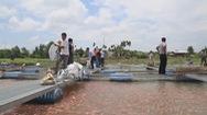 Chủ bè cá chết đuối sau khi lặn kiểm tra bè cá