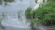 Chăn nuôi vịt gây ô nhiễm kênh nội đồng, bò thiếu nước uống, cá tôm không còn