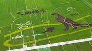 Hình vẽ khủng long khổng lồ trên cánh đồng lúa