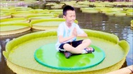 Đến Trung Quốc ngắm lá sen khổng lồ