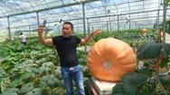 Kỳ lạ những quả bí ngô khổng lồ ở Trung Quốc