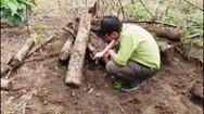 Phát hiện gần 400 lóng gỗ thông bị chôn dưới lòng đất