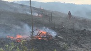 Trắng tay sau rừng cháy