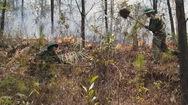 Rừng thông cháy lớn, hơn 1.000 người tham gia khống chế