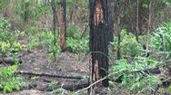 Lâm Đồng: Thiệt hại về rừng tăng mạnh