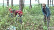 Hơn 40 tỷ đồng nhân rộng mô hình giảm nghèo tại Lâm Đồng