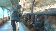 Lâm Đồng đào tạo nghề nông nghiệp cho khoảng 28.000 lao động