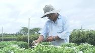 Trồng mai vạn phúc giúp nhiều hộ nông dân làng hoa Sa Đéc thu nhập ổn định