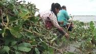 Những sản vật mùa nước nổi nơi rốn lũ