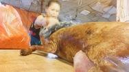 Tin nóng 24h: Thịt chó vẫn là món ăn khoái khẩu, khó bỏ với nhiều người dân Hà Nội