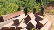 Phát hiện thêm 500m3 gỗ bị lâm tặc khai thác