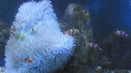 Chiêm ngưỡng những mẫu san hô Hoàng Sa, Trường Sa