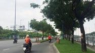 TP.HCM đề xuất được chủ động lựa chọn cây xanh đô thị
