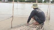 Nhiều lưới cước đánh bắt kiểu tận diệt ở vùng nước nổi