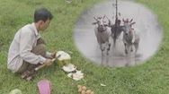 Tin nóng 24h: Trứng gà pha nước dừa tươi – bí quyết 'tăng tốc' cho những đôi bò đua