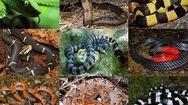 Phút cảnh báo: Đề phòng rắn tấn công người trong mùa mưa