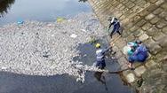 Cá chết hàng loạt vì bị thiếu ôxy