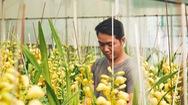 Góc nhìn trưa nay | Hoa lan được trồng từ công nghệ cao rộn ràng vào vụ Tết