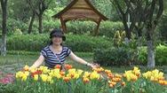 Du khách thích thú với vườn hoa tulip tại TP.HCM