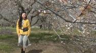 Video: Mùa hoa mơ trắng trên cao nguyên Mộc Châu