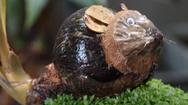 Video: Tạo hình chuột từ những quả dừa khô