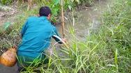 Trải nghiệm đánh dậm bắt cá ở đồng quê Tuyên Quang