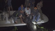Săn cá sấu khổng lồ to kỷ lục ở đầm lầy Florida