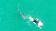 Video: Khoảnh khắc vận động viên lướt ván chạm trán với cá mập