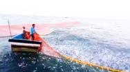 Video: Cận cảnh 3 con tàu vây lưới đánh bắt đàn cá cơm 50 tấn
