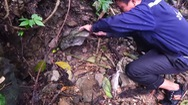 Video: Đặt bẫy đá săn chuột núi ở rừng Tây Bắc