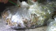 Góc nhìn trưa nay | Chợ côn trùng độc đáo chỉ bán giữa khuya ở Sài Gòn