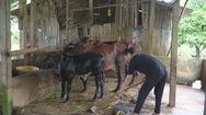Con những nông dân xứ Dừa Bến Tre cùng mẹ cha khởi nghiệp