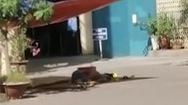 Video: Nam shipper rơi từ tầng cao chung cư xuống đất tử vong