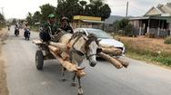 Xe ngựa, nét văn hoá đặc sắc của người Khmer ở Bảy Núi