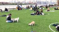 Video: Mỹ vẽ vòng tròn ở công viên, yêu cầu vui chơi có khoảng cách