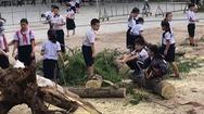 Video: Thêm một cây phượng bật gốc trong trường tiểu học tại Bình Dương