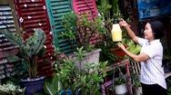 Góc nhìn trưa nay | Độc đáo khu vườn từ đồ tái chế