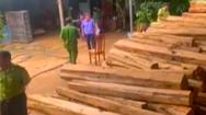 Video: Phát hiện vụ vận chuyển, tàng trữ gỗ trái phép quy mô lớn