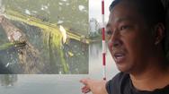 Video: Cá sấu xuất hiện trên kênh Tẻ làm người dân hoang mang