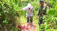 Video: Bò tót bị lâm tặc sát hại trong Vườn quốc gia Cát Tiên