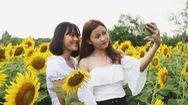 Góc nhìn trưa nay | Bạn trẻ thích thú check-in với cánh đồng hoa rộng 4 hécta ở Sài Gòn