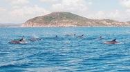 Video: Kỳ thú đàn cá heo 200 con trên biển Phú Yên