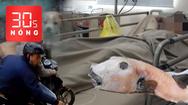 Bản tin 30s Nóng: Ăn bao tử cá mặt thỏ coi chừng liệt toàn thân; Câu trộm chó cảnh ở TP.HCM
