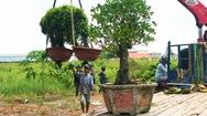 Video: Chủ tịch UBND xã mượn cây cảnh hàng trăm triệu đồng không trả, UBND huyện vào cuộc xác minh