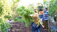 Video: Một nông dân trồng hơn 57kg cần sa tươi trong vườn cam ở Vĩnh Long