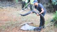 Video: Khởi tố 'shipper' rắn hổ mang chúa 21 kg ở Đồng Nai