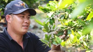 Góc nhìn trưa nay | Sài Gòn trở lạnh, nhà vườn sợ mai nở không kịp Tết